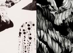 Linda Linko & Tiina Koivusalo: Harmonia, Entropia