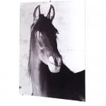 Tanja Koljonen: Horses east, horses west