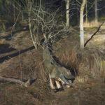 Matilda Enegren: Puu, 95x125cm, oil on canvas, 2017